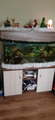 Аквариум с шкаф,японки шаран кои