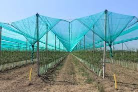 Plasa antigrindina-protectie culturi-impotriva daunatoarelor-ITALIA