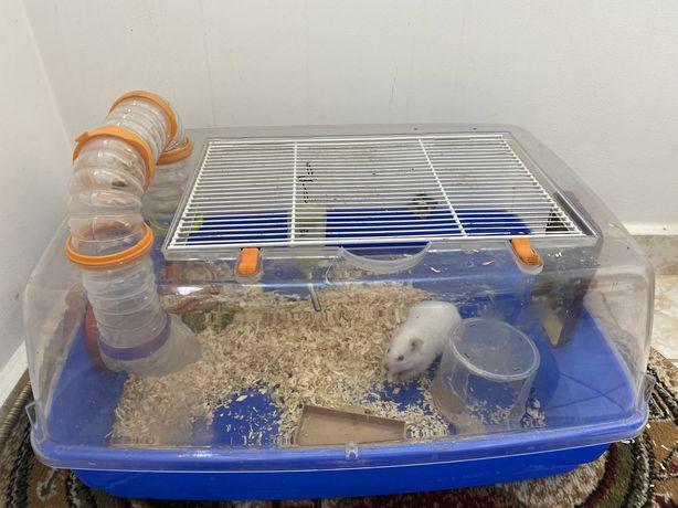 Vand hamster sirian alb cu cusca si accesorii