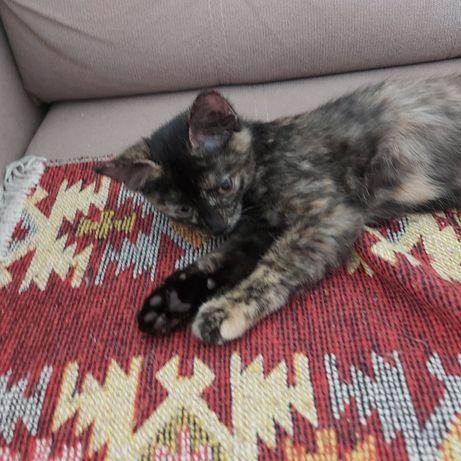котёнок 3 месяцев нуждается в любящем хозяине/хозяйке