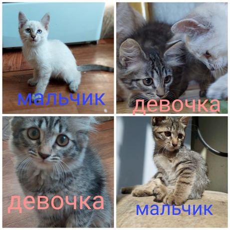 Чудесные котята ищут дом и заботливых людей.