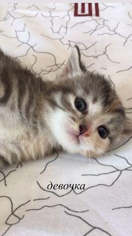 отдадим кошек в хорошие руки