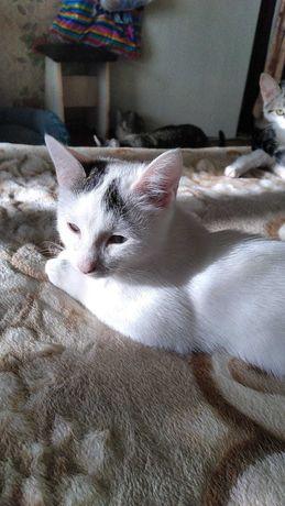 Бесплатно дарим котика