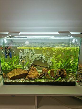 Продам красивый аквариум.
