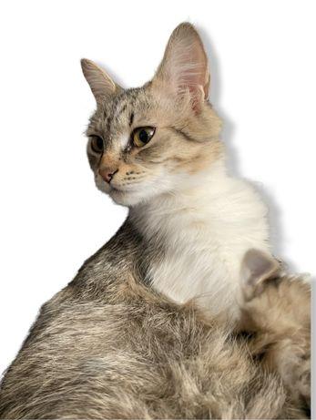 Donez pisica de rasa