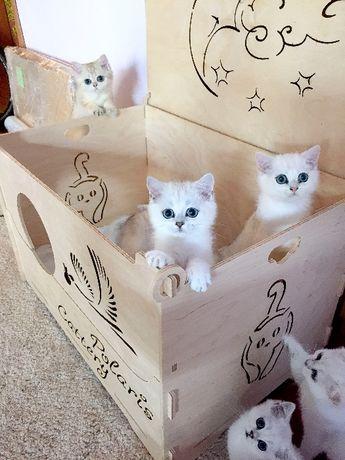 Родилен бокс за майка с котенца