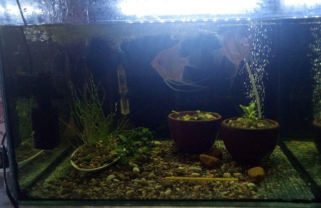 Продам аквариум с рыбками