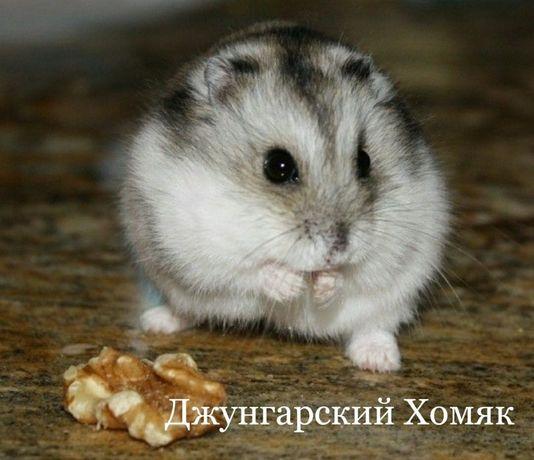 """Хомяки в зоомагазине """"ЖИВОЙ МИР"""""""