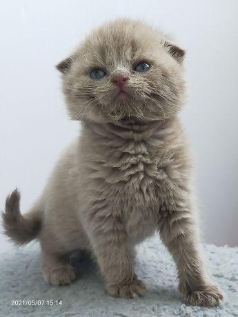 Продам котяток-мальчики