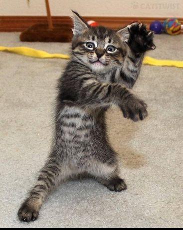 Кот. Кушает сам. Отдам в хорошие руки. Бесплатно.