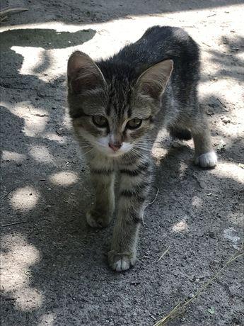Отдам котят хорошим хозяевам 4 месяца