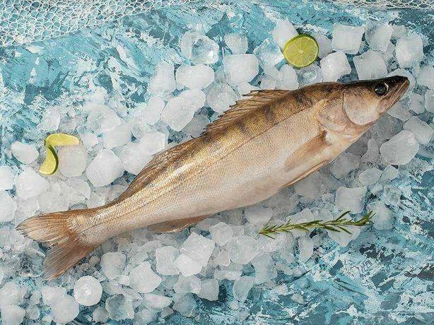 рыба балык судак