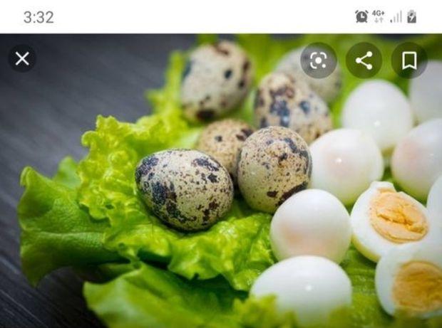 Домашние яйца и мясо перепелов,Бөдене жумырткасы, ет