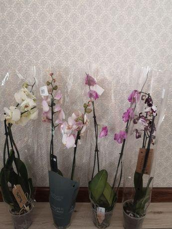 Продам орхидеи и много других растении
