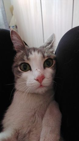 Пропала  котёнка