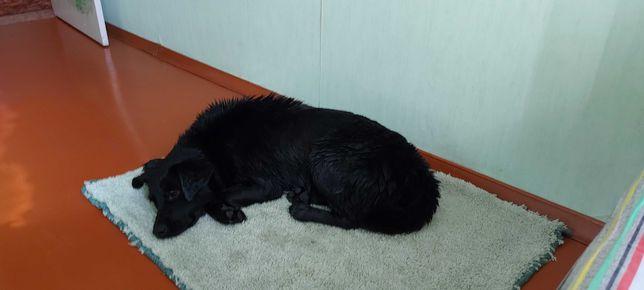 Найдена собака. Кто потерял?