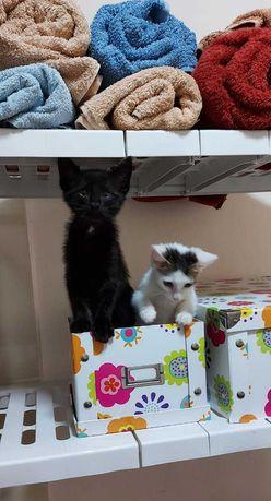 Очень милые котята ищут себе добрую и хорошую семью