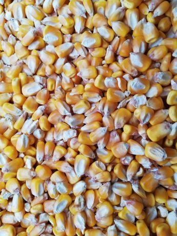 Vand porumb 2019, grâu, amestec de cereale, pisat (uruiala):
