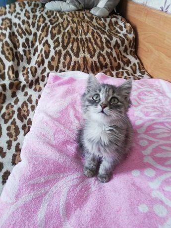 Пристраивается котенок