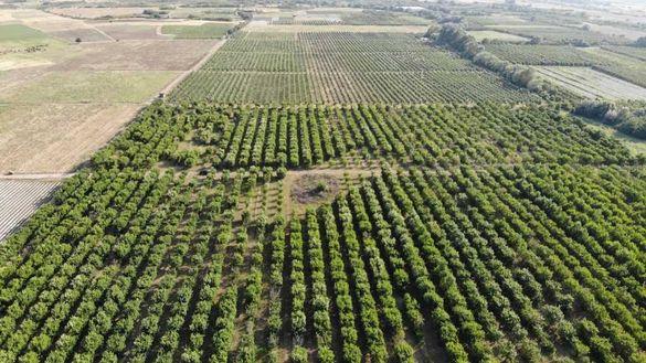 Продава се Овощна градина / Земеделска земя в Кричим, Пловдив