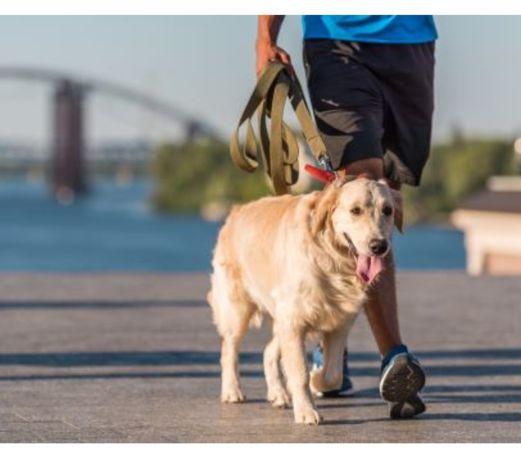 Plimb caini in Oradea (dog walker)