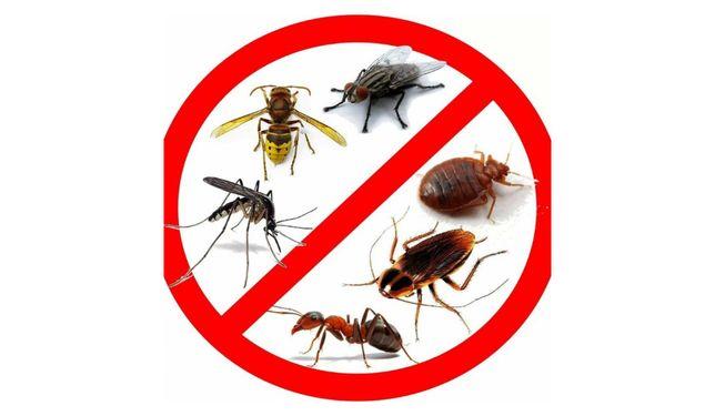 Результат 100%! Дезинфекция клопов, тараканов, муравьев, клещей, крыс