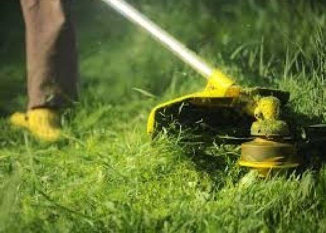 Taiat iarba, tai buruieni, defrisat