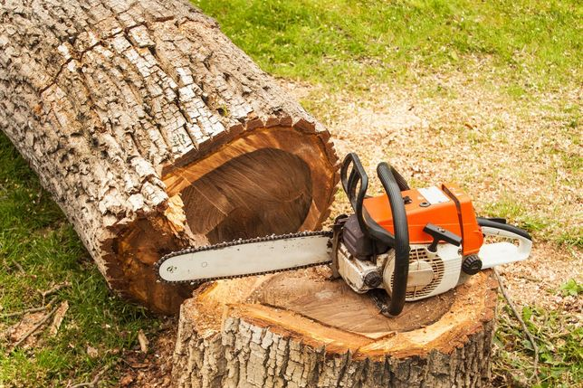 Услуги по спилу деревьев