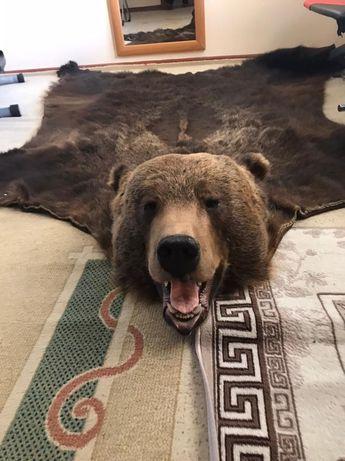 Ковёр медведь. Чучело медведя.