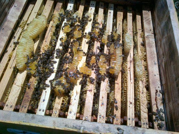 roiuri si familii de albine