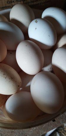 Домашние яйца 400тг