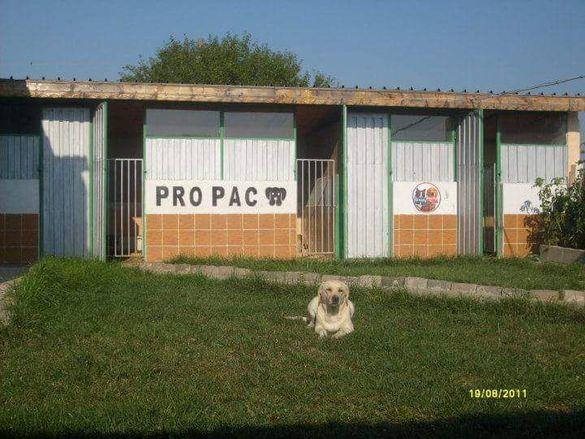 Хотел за кучета