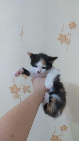 Отдам даром котят в добрые руки!