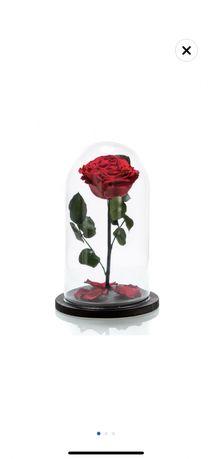 Trandafir criogenat in cupola de sticla