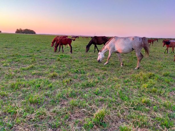 4 Лошади жеребые + 2 жеребенка
