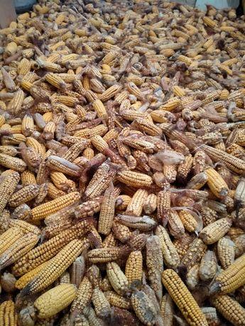 Кукуруза кормовая