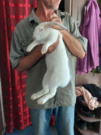 Кролики крупные самцы и самки