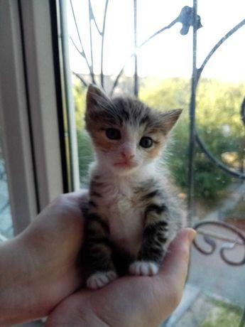 Котёнку нужен хозяин или хозяйка