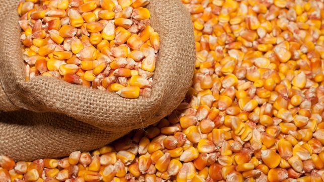 Продам кукурузу (зерно)
