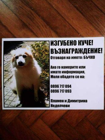 Изгубено мъжко куче- немски шпиц в с.Лъка,обл.Бургас. ВЪЗНАГРАЖДЕНИЕ !