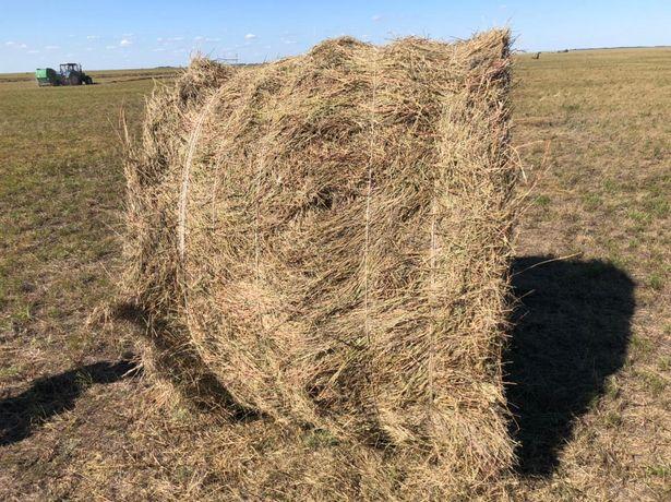 Продажа сено в рулонах степное