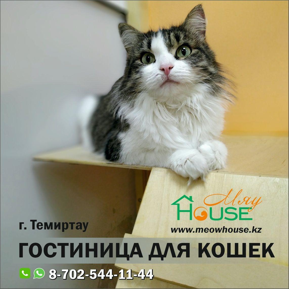 Гостиница для кошек. Передержка для домашних питомцев