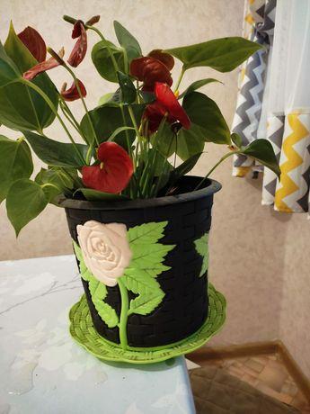 Цветы разные женские счастье, мужские счастье, долларовые цветы