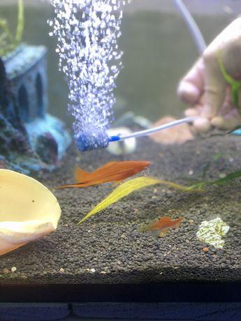 Обмен рыбок