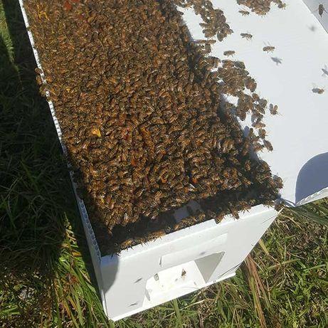 Пчелни майки и отводки от лицензиран биологичен производител