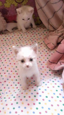 Маленький беленький котёнок