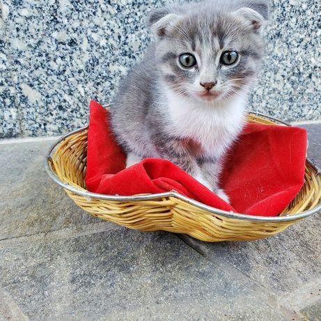 Котенок ищет новую заботливую семью