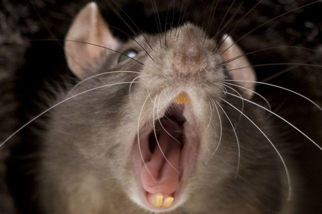 """Зффективные средства от крыс мышей. маг """"Сад-Огород"""" Тайбурыл"""