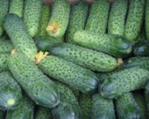 Огурцы с поля без ГМО