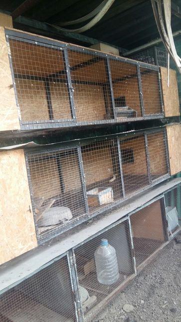 Кроликам комфортное жильё